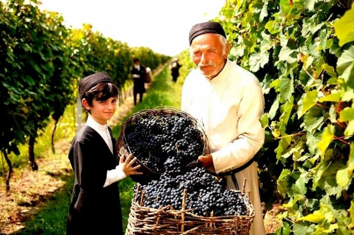 Weinlese in Georgien