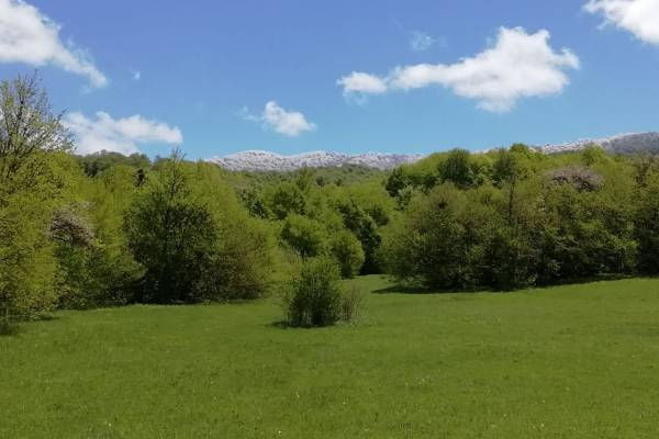 Nationalpark Tbilissi, Ialno-Kamm