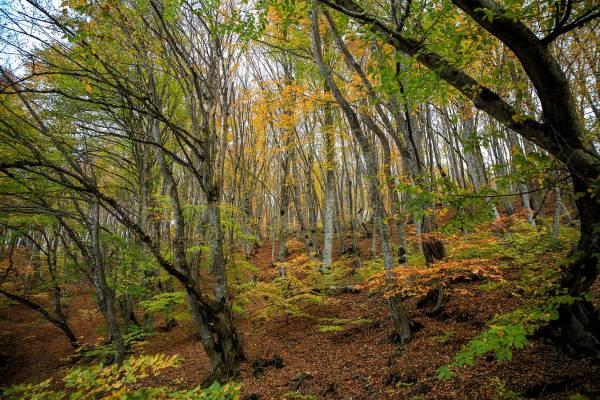 Nationalpark Tbilissi, Wald