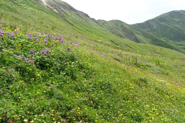 Schutzgebiete Pschaw-Chewsureti, Berglandschaft